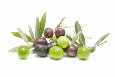 rama de olivo: aceitunas frescas