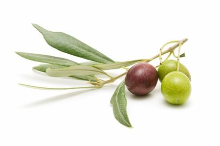 foglie ulivo: avanguardia di olive  Archivio Fotografico