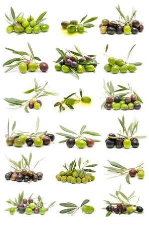 olive leaves: olives collection