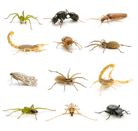 insect collection Standard-Bild