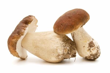 paddenstoel: Boletus edulis op witte achtergrond