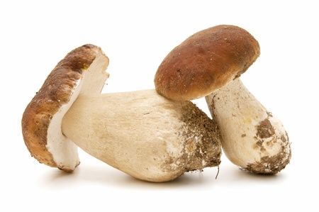 funghi: Boletus edulis su sfondo bianco
