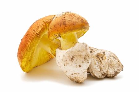 caesarea: amanita caesarea on white background