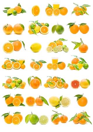 citricos: Colecci�n de c�tricos Foto de archivo