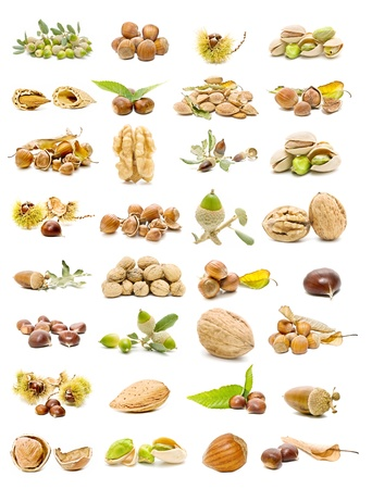 Collection of nuts Standard-Bild