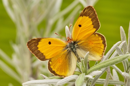 butterflies in the garden photo