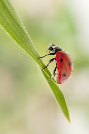 Ladybug in the garden Stock Photo