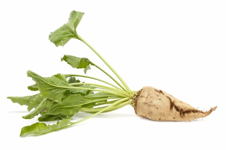 freshly harvested sugar beet on white background