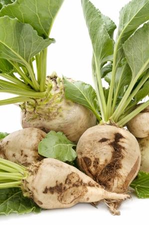 freshly harvested sugar beet on white background
