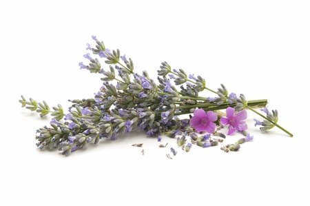 lavender herb of the field reflected on white background Stock Photo - 10778858