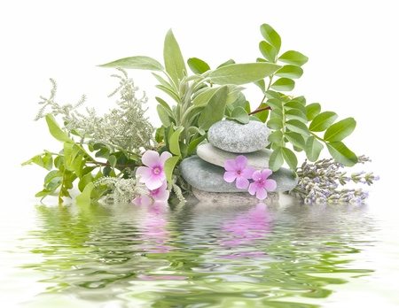medicinal: spa treatment with natural herbs and essences