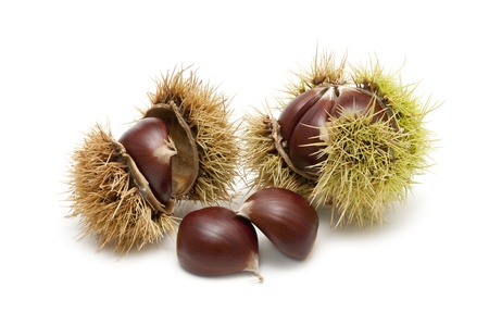 Freshly harvested chestnuts isolated on white background  photo