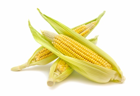 corn cobs on white background