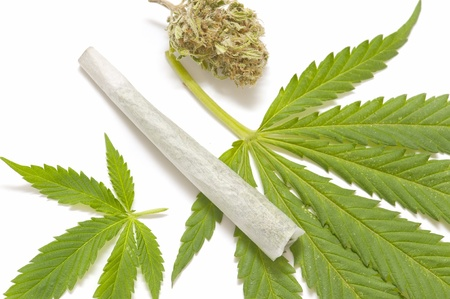 plant drug: marijuana leaf and cigarette