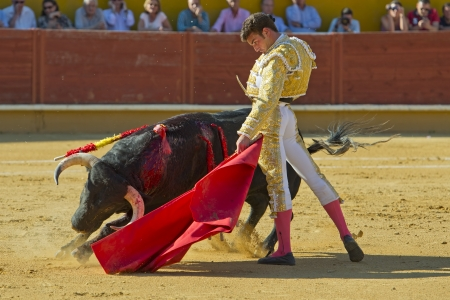 AVILA  SPAIN - JUNE 15: Fernando Adrian in action during a bullfight, typical Spanish tradition where a bullfighter kills a bull on June 15, 2013 in Avila, Spain.