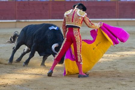 albero: AVILA  SPAIN - JUNE 15: Julian Lopez El Juli in action during a bullfight, typical Spanish tradition where a bullfighter kills a bull on June 15, 2013 in Avila, Spain. Editorial