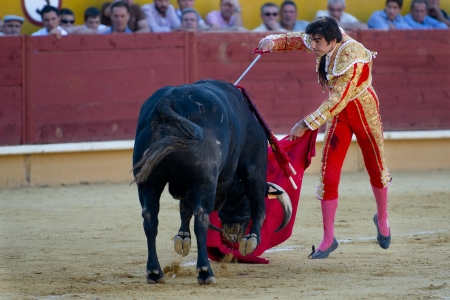 AVILA  SPAIN - JUNE 15: Miguel Angel Perera in action during a bullfight, typical Spanish tradition where a bullfighter kills a bull on June 15, 2013 in Avila, Spain.