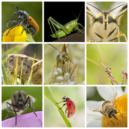 collage of insects photo