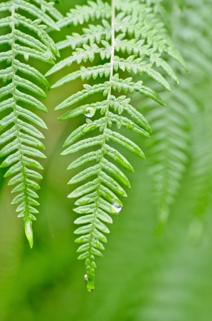 ferns found by the roadside in the wild Stock Photo - 15659901