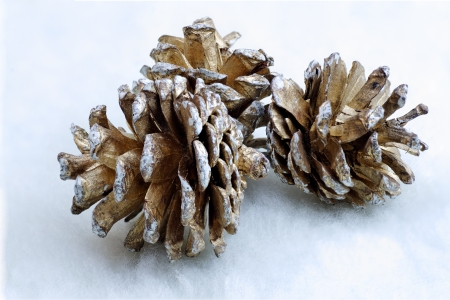 three Christmas decorating pinecones on white silk Stock Photo - 16399027