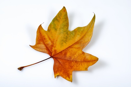 macro photograph of a fallen leaf in autumn Stock Photo - 16633755