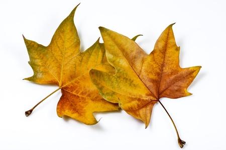 macro photo of leaves folded on white background Stock Photo - 16633760