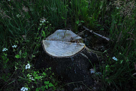 A tree stump in the forest Banco de Imagens - 152436381