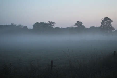 Fog in the evening over a pasture with trees in the background Banco de Imagens