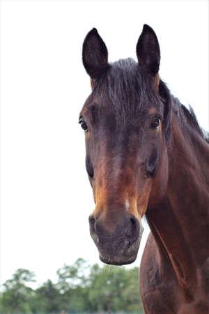 Head of a brown horse as a portrait Banco de Imagens - 152846045