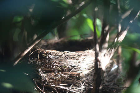 Empty birds nest in a rhododendron bush