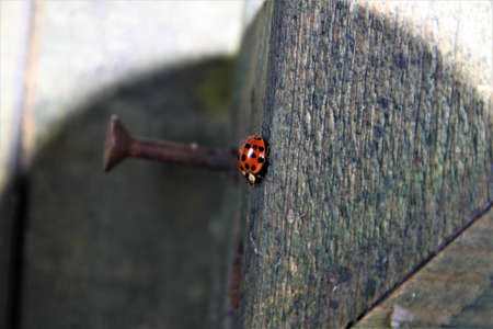 Ladybug on the edge of a wooden board