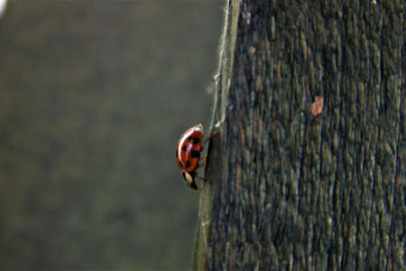 Ladybug on the edge of a wooden board with blurry background