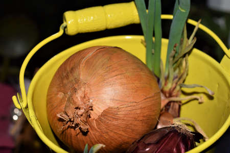Vegetable onion in a yellow metal pail