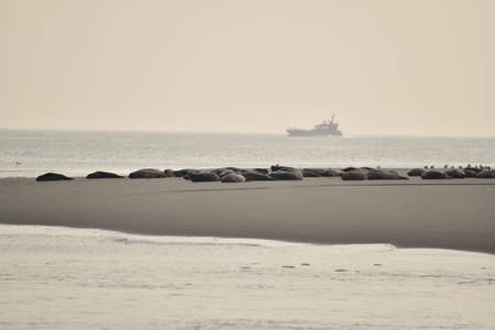 Seals on a sand bank surrounded by the sea on a hazy day