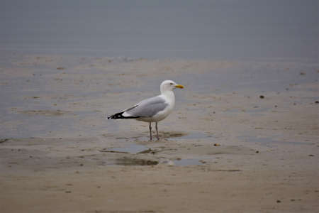 A seagull is sitting at the beach