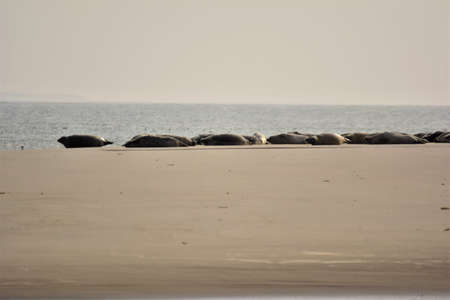Seals on a sand bank on a hazy day