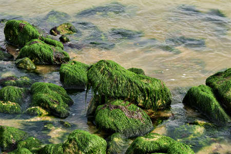 Stones overgrown with algae in the shallow water on the beach Banco de Imagens