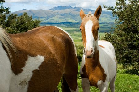 horse near its mother Stock Photo