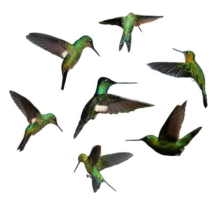 composition of seven hummingbirds shots isolated over white background