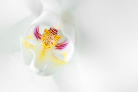 beautiful silky white orchid detail macro image
