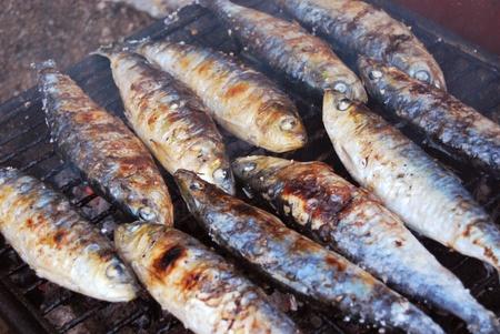 sardinas: Sardinas