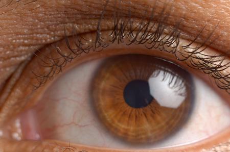 brown eye: brown eye