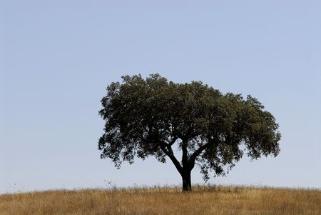 Tree isolated in the lanscape Stock Photo - 4131593