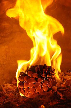 Burning pine Stock Photo - 4269006