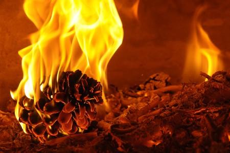 Burning pine Stock Photo - 4488703