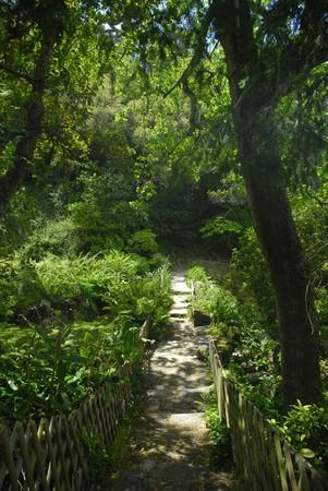 sintra: Trail in Monserrate park, Sintra