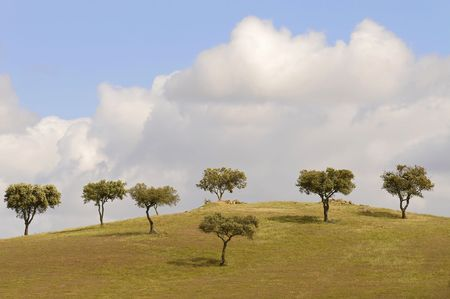 Group of trees isolated against the sky in a green field Stock Photo - 4738171