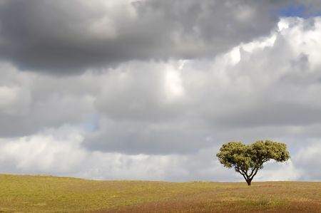tree in the landscape photo