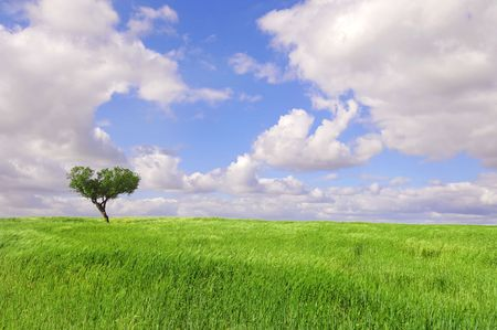 Tree isolated against the sky in a green field Stock Photo - 4768922