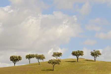 Group of trees isolated against the sky in a green field Stock Photo - 4806996